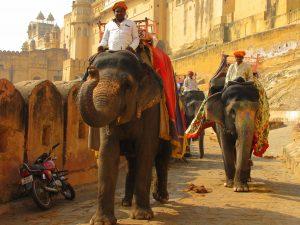 Elefantes em Frente a fortaleza Amber em Jaipur, durante a Viagem à Índia